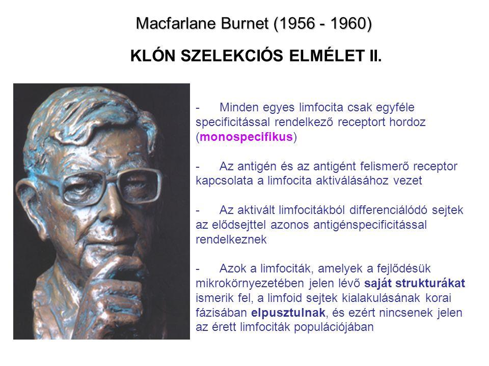 Macfarlane Burnet (1956 - 1960) Macfarlane Burnet (1956 - 1960) KLÓN SZELEKCIÓS ELMÉLET II.