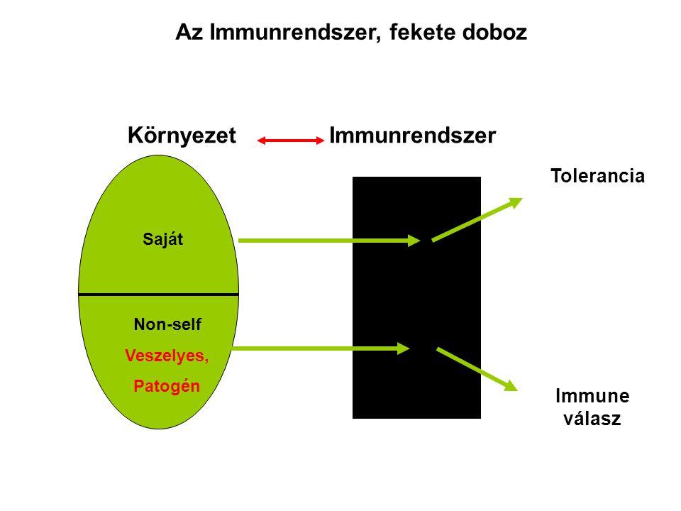 Környezet Saját Non-self Veszelyes, Patogén Immunrendszer Tolerancia Immune válasz Az Immunrendszer, fekete doboz