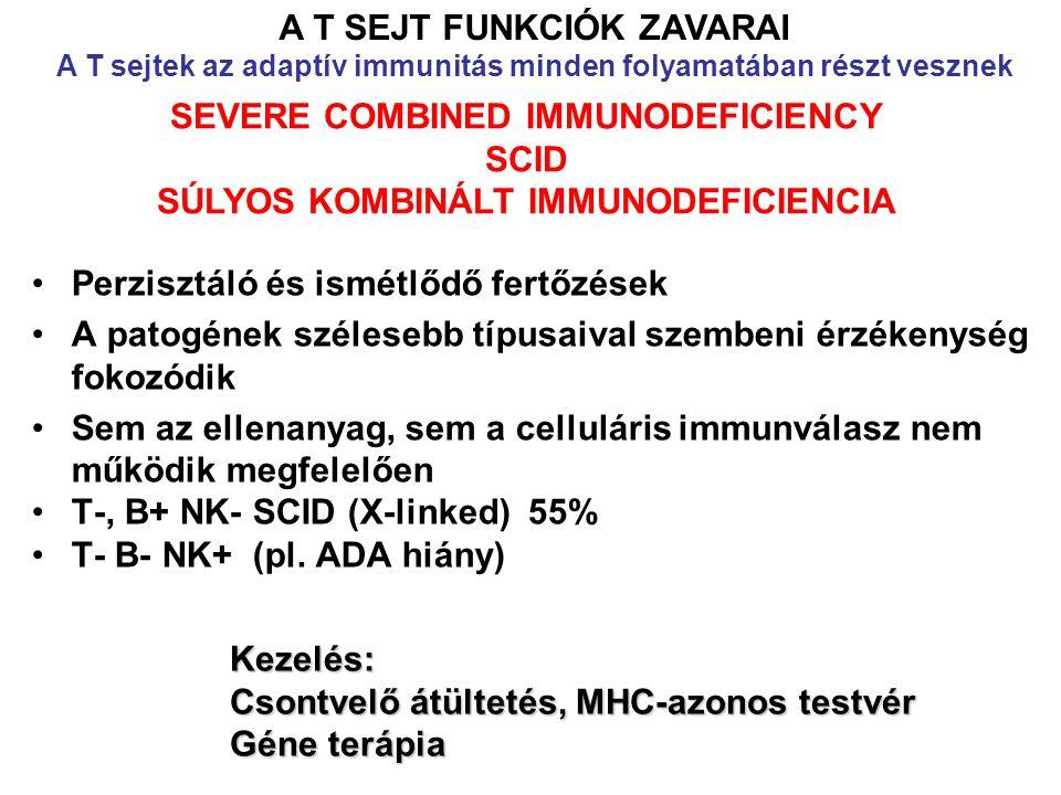 Perzisztáló és ismétlődő fertőzések A patogének szélesebb típusaival szembeni érzékenység fokozódik Sem az ellenanyag, sem a celluláris immunválasz nem működik megfelelően T-, B+ NK- SCID (X-linked) 55% T- B- NK+ (pl.