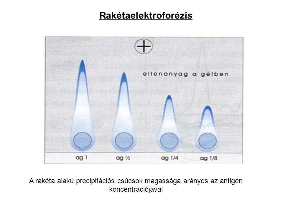 Rakétaelektroforézis A rakéta alakú precipitációs csúcsok magassága arányos az antigén koncentrációjával