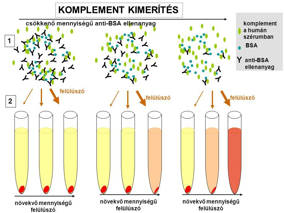 IMMUNKOMPLEX Az antigénnek az ellenanyaggal alkotott (oldható) komplexei.
