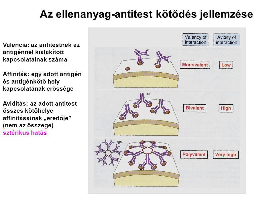 """Valencia: az antitestnek az antigénnel kialakított kapcsolatainak száma Affinitás: egy adott antigén és antigénkötő hely kapcsolatának erőssége Aviditás: az adott antitest összes kötőhelye affinitásainak """"eredője (nem az összege) sztérikus hatás Az ellenanyag-antitest kötődés jellemzése"""
