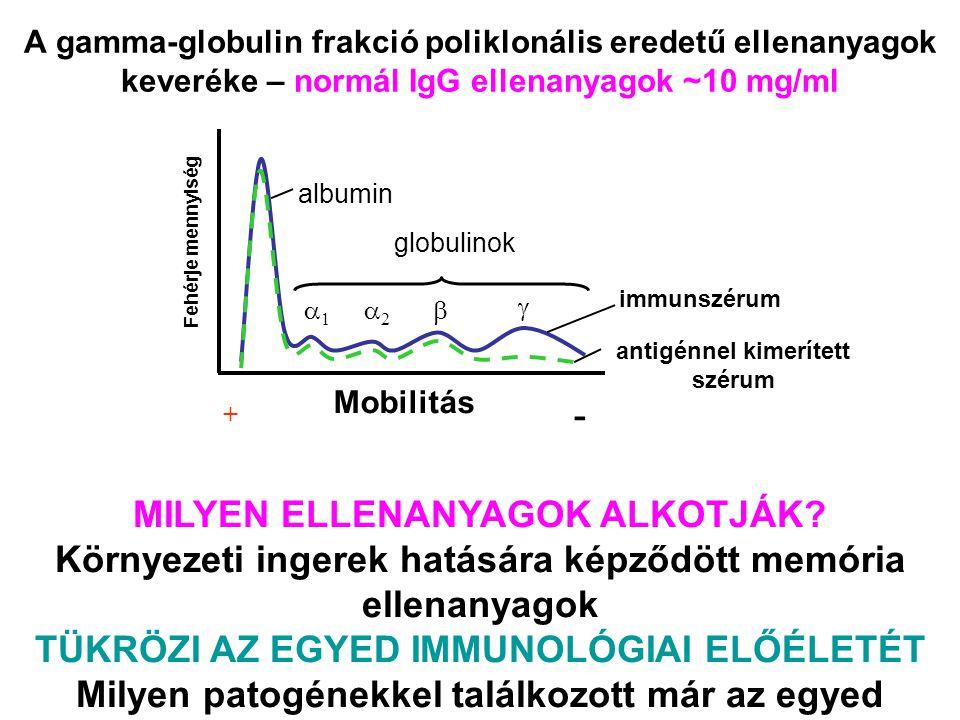 A gamma-globulin frakció poliklonális eredetű ellenanyagok keveréke – normál IgG ellenanyagok ~10 mg/ml immunszérum antigénnel kimerített szérum + - albumin globulinok Mobilitás Fehérje mennyiség MILYEN ELLENANYAGOK ALKOTJÁK.