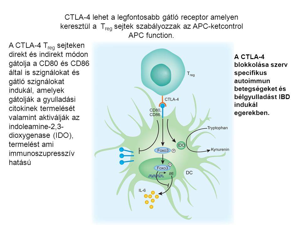 A CTLA-4 T reg sejteken direkt és indirekt módon gátolja a CD80 és CD86 által is szignálokat és gátló szignálokat indukál, amelyek gátolják a gyulladási citokinek termelését valamint aktiválják az indoleamine-2,3- dioxygenase (IDO), termelést ami immunoszupresszív hatású CTLA-4 lehet a legfontosabb gátló receptor amelyen keresztül a T reg sejtek szabályozzak az APC-ketcontrol APC function.