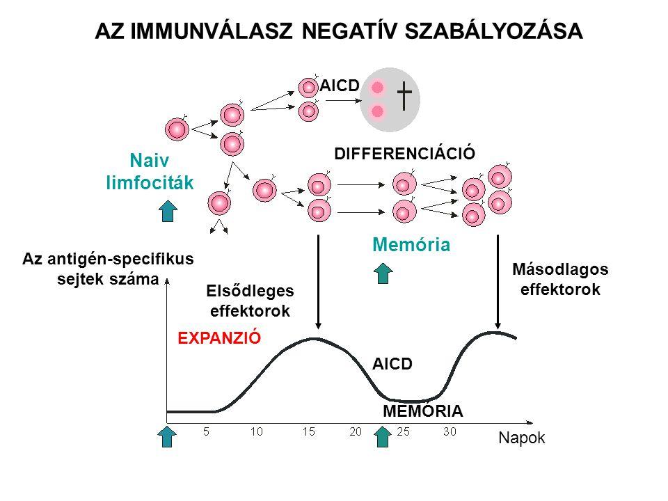AZ IMMUNVÁLASZ NEGATÍV SZABÁLYOZÁSA Naiv limfociták Az antigén-specifikus sejtek száma Elsődleges effektorok Másodlagos effektorok Memória DIFFERENCIÁCIÓ AICD EXPANZIÓ AICD MEMÓRIA Napok