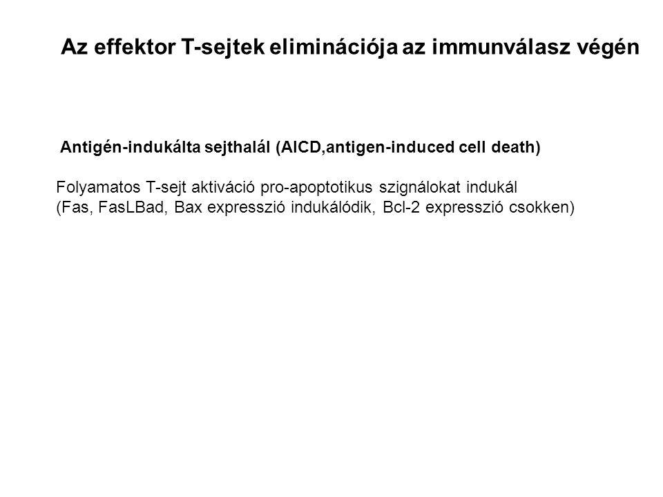 Az effektor T-sejtek eliminációja az immunválasz végén Antigén-indukálta sejthalál (AICD,antigen-induced cell death) Folyamatos T-sejt aktiváció pro-apoptotikus szignálokat indukál (Fas, FasLBad, Bax expresszió indukálódik, Bcl-2 expresszió csokken)