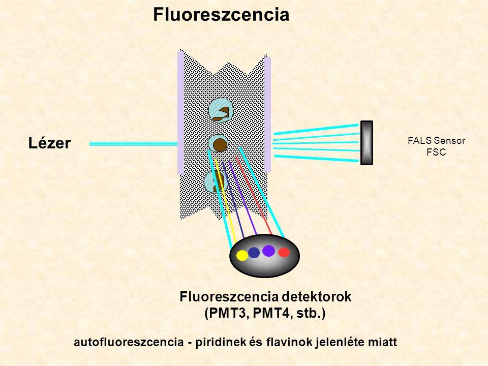 Lézer Fluoreszcencia FALS Sensor FSC Fluoreszcencia detektorok (PMT3, PMT4, stb.) autofluoreszcencia - piridinek és flavinok jelenléte miatt