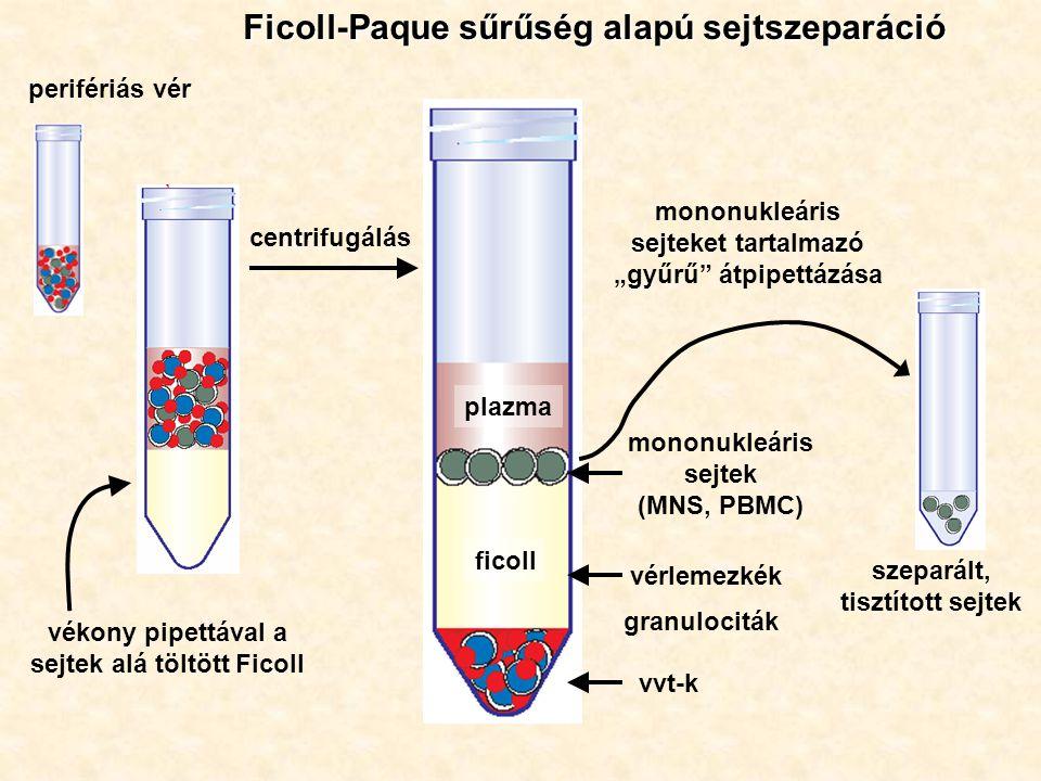 """Ficoll-Paque sűrűség alapú sejtszeparáció perifériás vér vékony pipettával a sejtek alá töltött Ficoll centrifugálás szeparált, tisztított sejtek plazma ficoll vvt-k mononukleáris sejtek (MNS, PBMC) vérlemezkék granulociták mononukleáris sejteket tartalmazó """"gyűrű átpipettázása"""