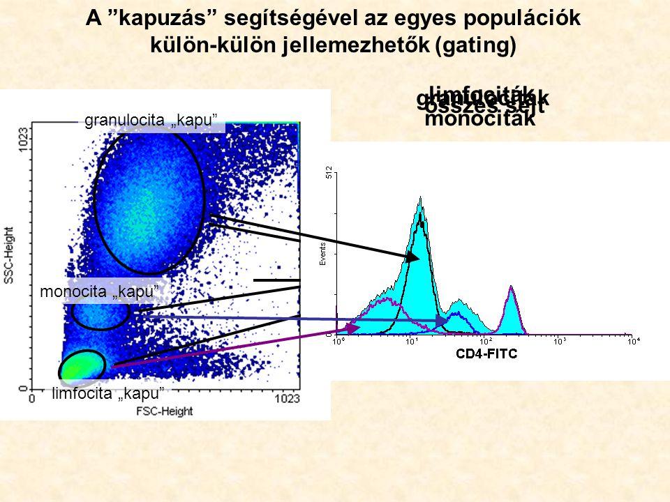 """összes sejt granulociták monociták limfociták A kapuzás segítségével az egyes populációk külön-külön jellemezhetők (gating) granulocita """"kapu monocita """"kapu limfocita """"kapu"""