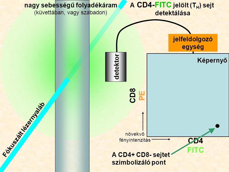 Fókuszált lézernyaláb Th nagy sebességű folyadékáram (küvettában, vagy szabadon) CD4 FITC CD8 PE detektor A CD4-FITC jelölt (T H ) sejt detektálása jelfeldolgozó egység Képernyő A CD4+ CD8- sejtet szimbolizáló pont növekvő fényintenzitás