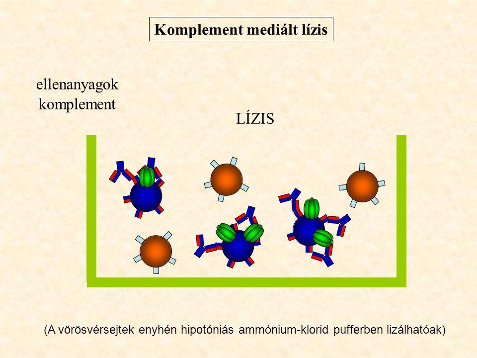 Komplement mediált lízis ellenanyagok komplement LÍZIS (A vörösvérsejtek enyhén hipotóniás ammónium-klorid pufferben lizálhatóak)