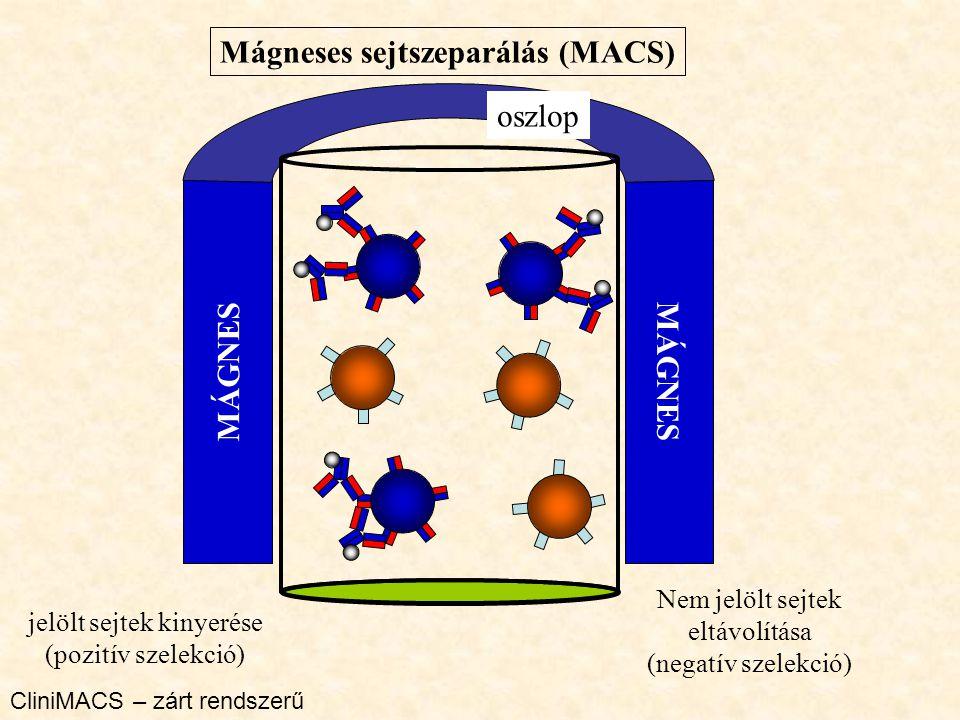 Mágneses sejtszeparálás (MACS) MÁGNES oszlop Nem jelölt sejtek eltávolítása (negatív szelekció) jelölt sejtek kinyerése (pozitív szelekció) CliniMACS – zárt rendszerű