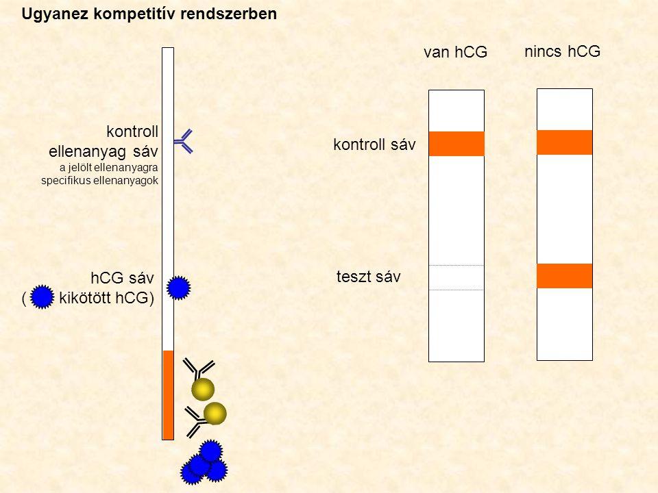 hCG sáv ( kikötött hCG) kontroll ellenanyag sáv a jelölt ellenanyagra specifikus ellenanyagok kontroll sáv teszt sáv van hCG nincs hCG Ugyanez kompetitív rendszerben