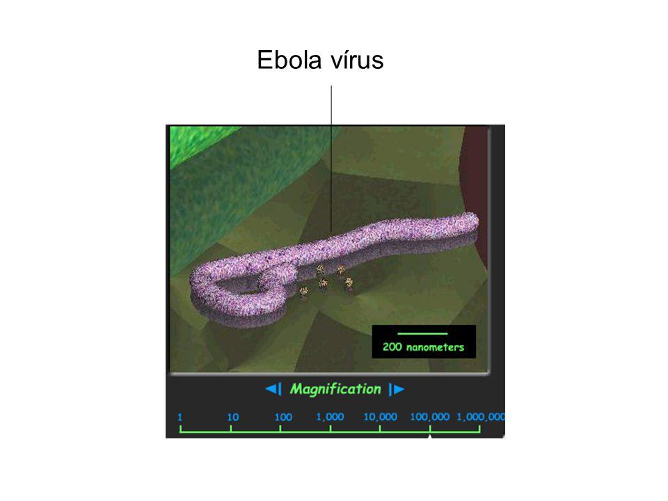 Ebola vírus