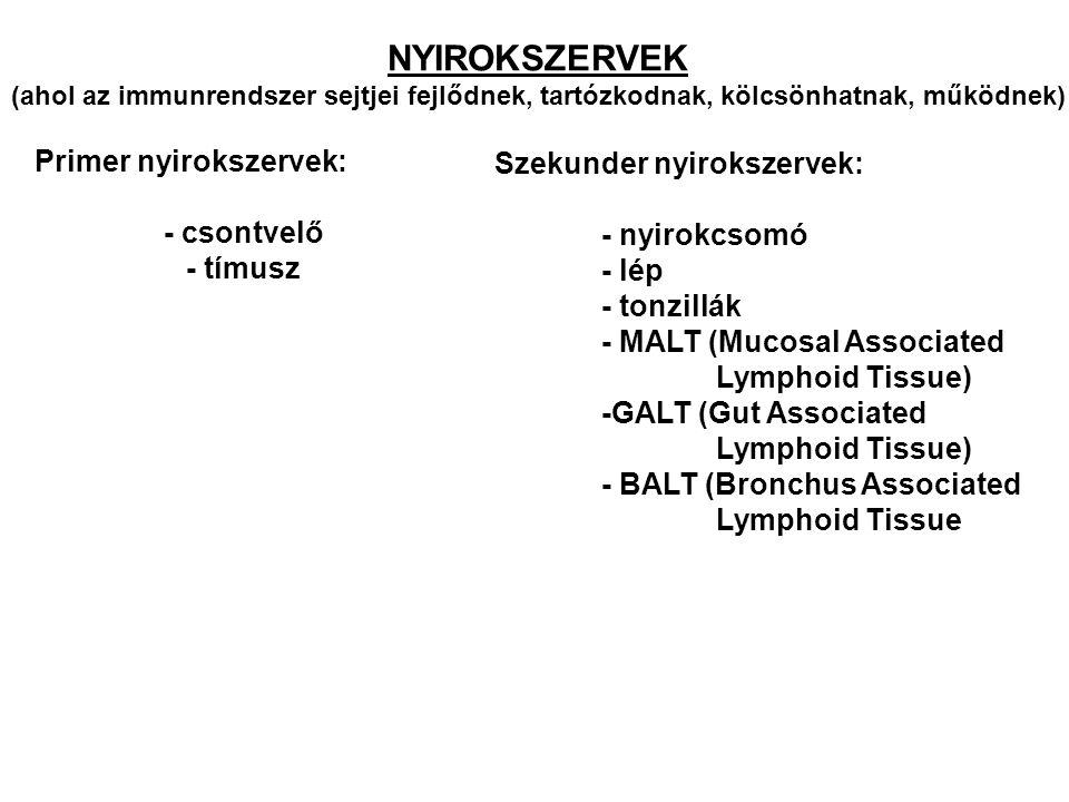 Primer nyirokszervek: - csontvelő - tímusz Szekunder nyirokszervek: - nyirokcsomó - lép - tonzillák - MALT (Mucosal Associated Lymphoid Tissue) -GALT (Gut Associated Lymphoid Tissue) - BALT (Bronchus Associated Lymphoid Tissue NYIROKSZERVEK (ahol az immunrendszer sejtjei fejlődnek, tartózkodnak, kölcsönhatnak, működnek)