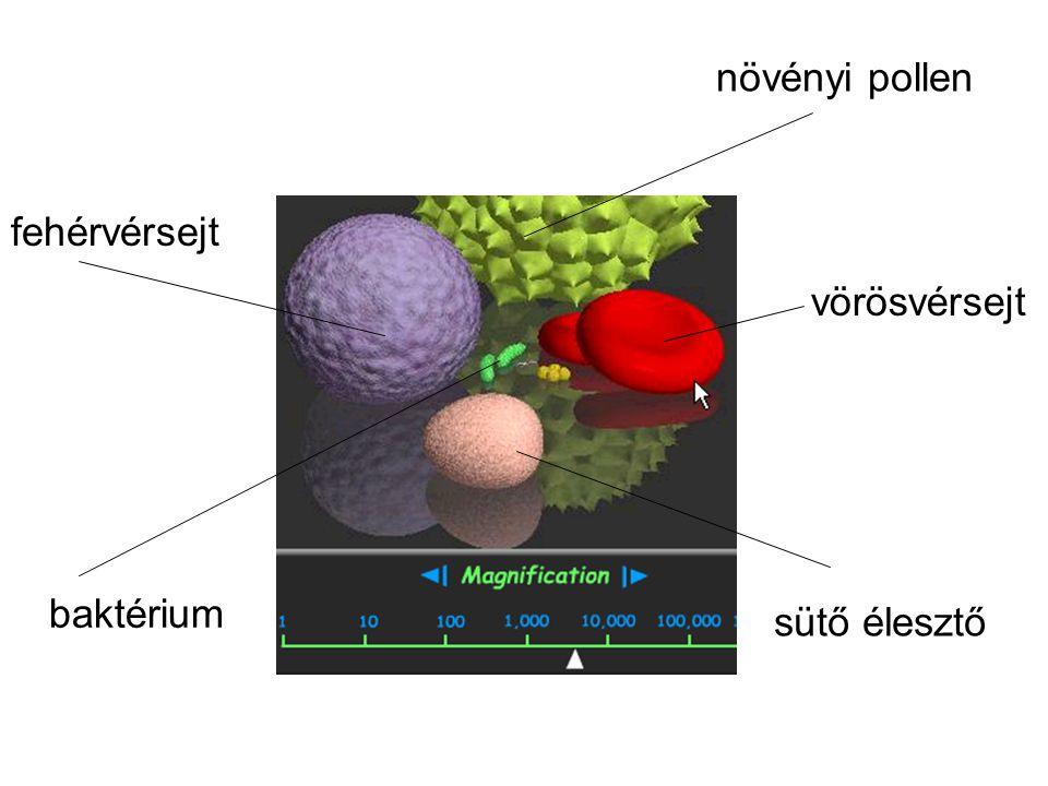 növényi pollen vörösvérsejt fehérvérsejt baktérium sütő élesztő
