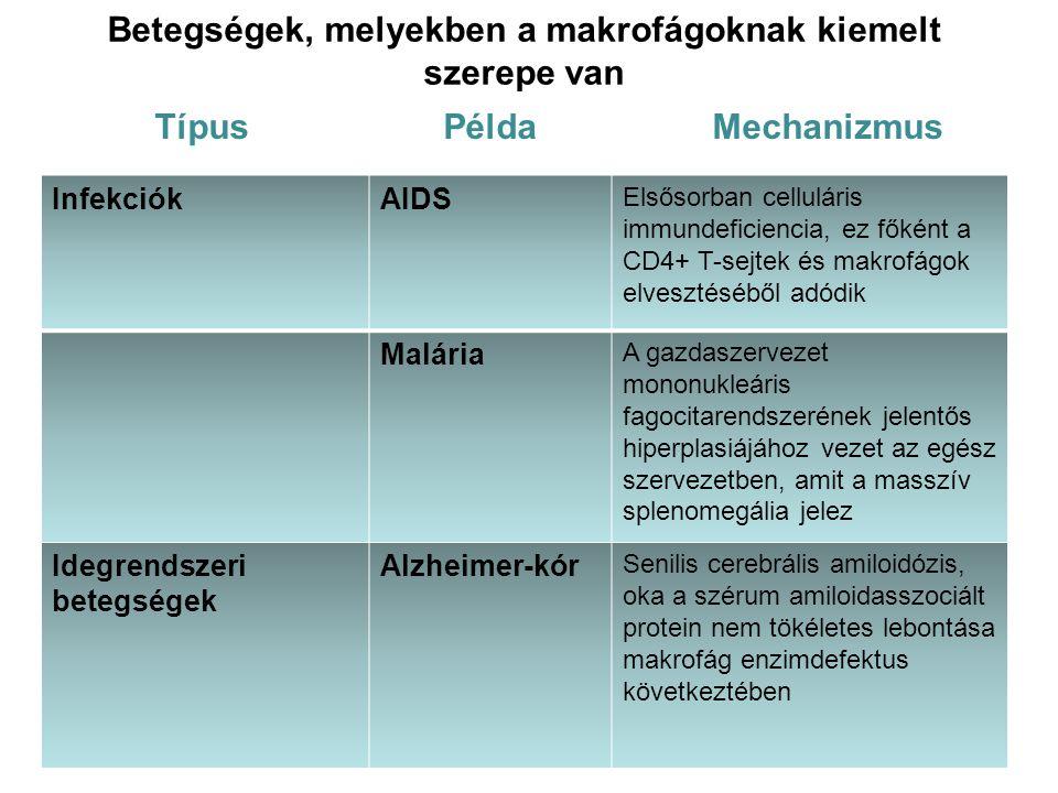 Betegségek, melyekben a makrofágoknak kiemelt szerepe van Típus Példa Mechanizmus InfekciókAIDS Elsősorban celluláris immundeficiencia, ez főként a CD