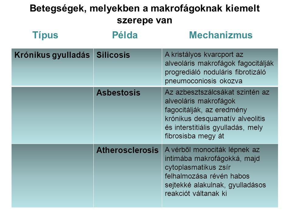 Betegségek, melyekben a makrofágoknak kiemelt szerepe van Típus Példa Mechanizmus Krónikus gyulladásSilicosis A kristályos kvarcport az alveoláris mak