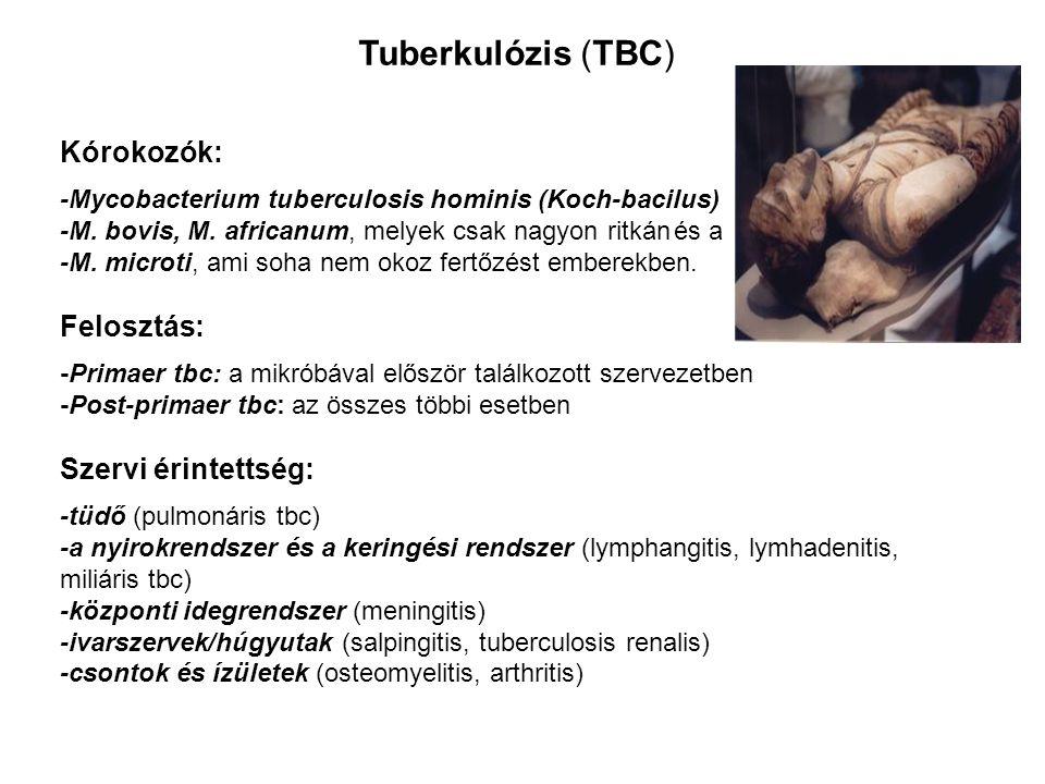 Kórokozók: -Mycobacterium tuberculosis hominis (Koch-bacilus) -M. bovis, M. africanum, melyek csak nagyon ritkán és a -M. microti, ami soha nem okoz f