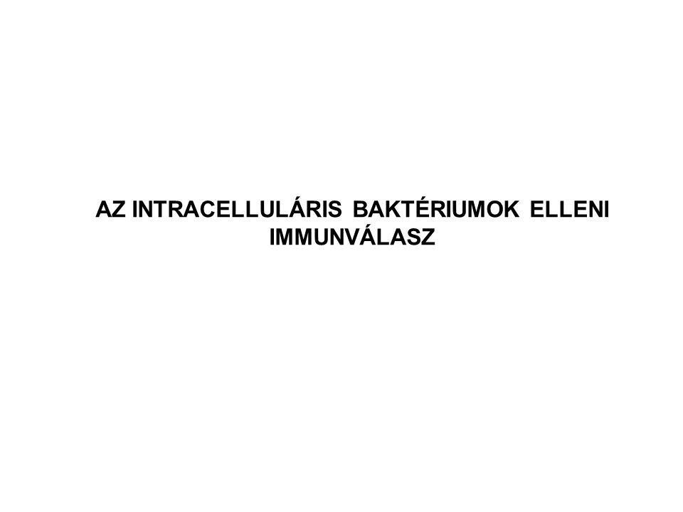 IFNγ IL-12 Baktérium elpusztítása a makrofágban CD4+ Th1 sejt Makrofág aktiváció Baktériumok menekülése a citoplazmába Makrofág lizise NK sejt CD8+ cytotoxikus T sejt MHC I MHC II AZ INTRACELLULÁRIS BAKTÉRIUMOK ELLENI IMMUNVÁLASZ Listeria monocytogenes bakteriolizin