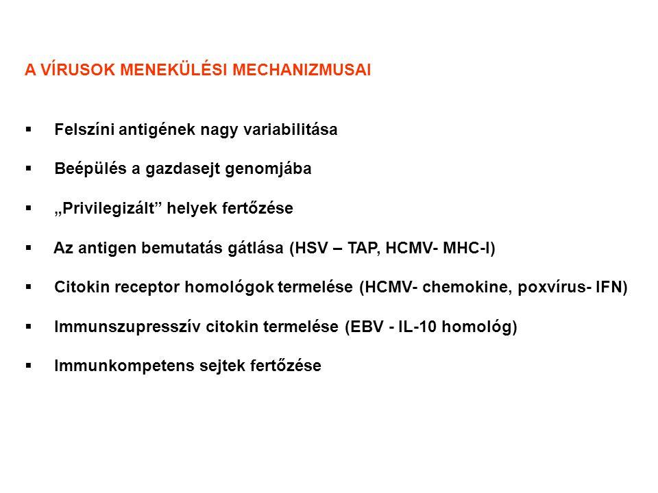 """A VÍRUSOK MENEKÜLÉSI MECHANIZMUSAI  Felszíni antigének nagy variabilitása  Beépülés a gazdasejt genomjába  """"Privilegizált helyek fertőzése  Az antigen bemutatás gátlása (HSV – TAP, HCMV- MHC-I)  Citokin receptor homológok termelése (HCMV- chemokine, poxvírus- IFN)  Immunszupresszív citokin termelése (EBV - IL-10 homológ)  Immunkompetens sejtek fertőzése"""