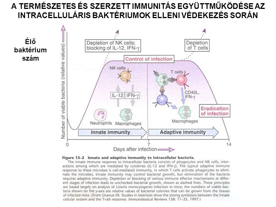 AZ INTRACELLULÁRIS BAKTÉRIUMOK ELLENI IMMUNVÁLASZ – fakultatív patogének TERMÉSZETES IMMUNITÁS Fagocitózis – neutrofil granulocita makrofág NK sejt – közvetlen aktiváció IFNγ által makrofág közvetítette aktiváció IL – 12 által SZERZETT IMMUNITÁS Sejt közvetítette – makrofág aktiváció a CD4+ Th1 sejtek által CD8+ citotoxikus T sejtek aktivációja baktériumok menekülése a vakuolumokból a citoszólba Granuloma - a nem eliminált baktériumok izolálása lokalizált gyulladási válasz