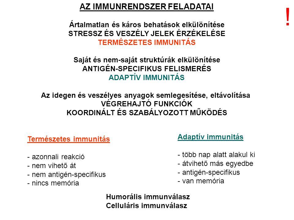Fagocitózisra képes sejtek -Makrofágok -Neutrofil granulociták -Dendrtitikus sejtek Antigén prezentáló sejtek -Makrofágok -B-limfociták -Dendrtitikus sejtek .