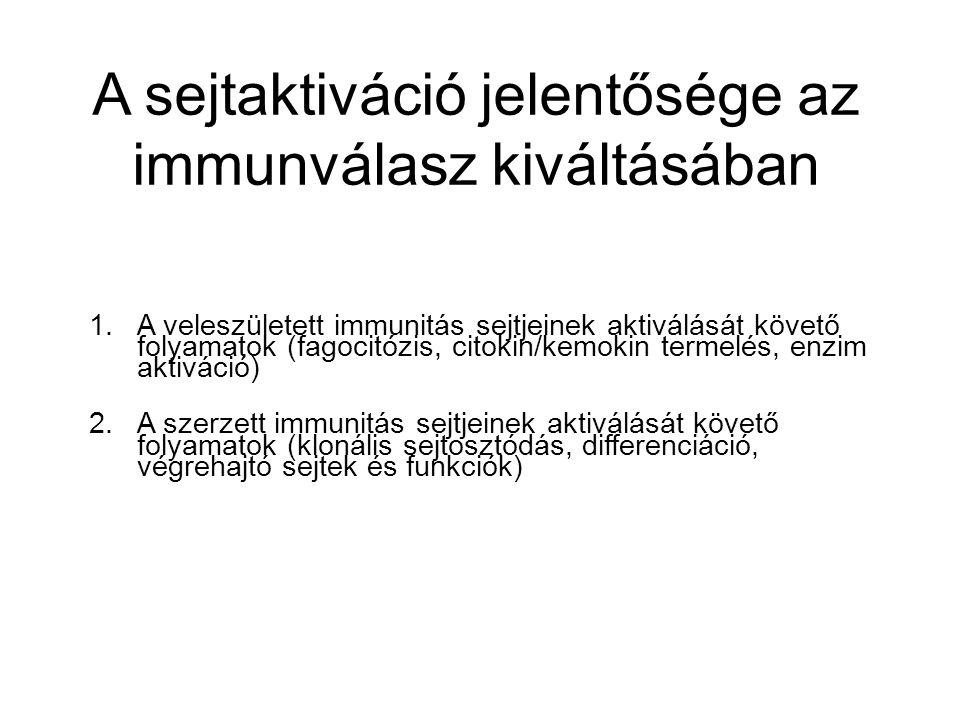 1.A veleszületett immunitás sejtjeinek aktiválását követő folyamatok (fagocitózis, citokin/kemokin termelés, enzim aktiváció) 2.A szerzett immunitás sejtjeinek aktiválását követő folyamatok (klonális sejtosztódás, differenciáció, végrehajtó sejtek és funkciók) A sejtaktiváció jelentősége az immunválasz kiváltásában