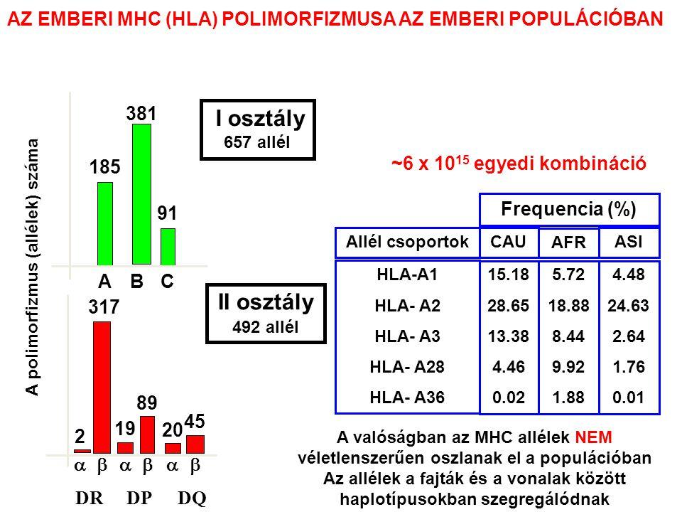 A valóságban az MHC allélek NEM véletlenszerűen oszlanak el a populációban Az allélek a fajták és a vonalak között haplotípusokban szegregálódnak 15.18 28.65 13.38 4.46 0.02 5.72 18.88 8.44 9.92 1.88 4.48 24.63 2.64 1.76 0.01 CAU AFR ASI Frequencia (%) HLA-A1 HLA- A2 HLA- A3 HLA- A28 HLA- A36 Allél csoportok 185 91 ABC A polimorfizmus (allélek) száma I osztály 657 allél 381   2 317 19 89 20 45 II osztály 492 allél DRDPDQ ~6 x 10 15 egyedi kombináció AZ EMBERI MHC (HLA) POLIMORFIZMUSA AZ EMBERI POPULÁCIÓBAN