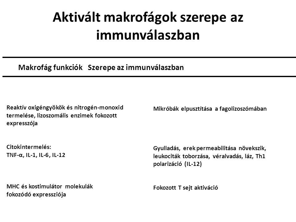 Aktivált makrofágok szerepe az immunválaszban Makrofág funkciók Szerepe az immunválaszban Reaktív oxigéngyökök és nitrogén-monoxid termelése, lizoszomális enzimek fokozott expresszója Citokintermelés: TNF-α, IL-1, IL-6, IL-12 MHC és kostimulátor molekulák fokozódó expressziója Mikróbák elpusztítása a fagolizoszómában Gyulladás, erek permeabilitása növekszik, leukociták toborzása, véralvadás, láz, Th1 polarizáció (IL-12) Fokozott T sejt aktiváció