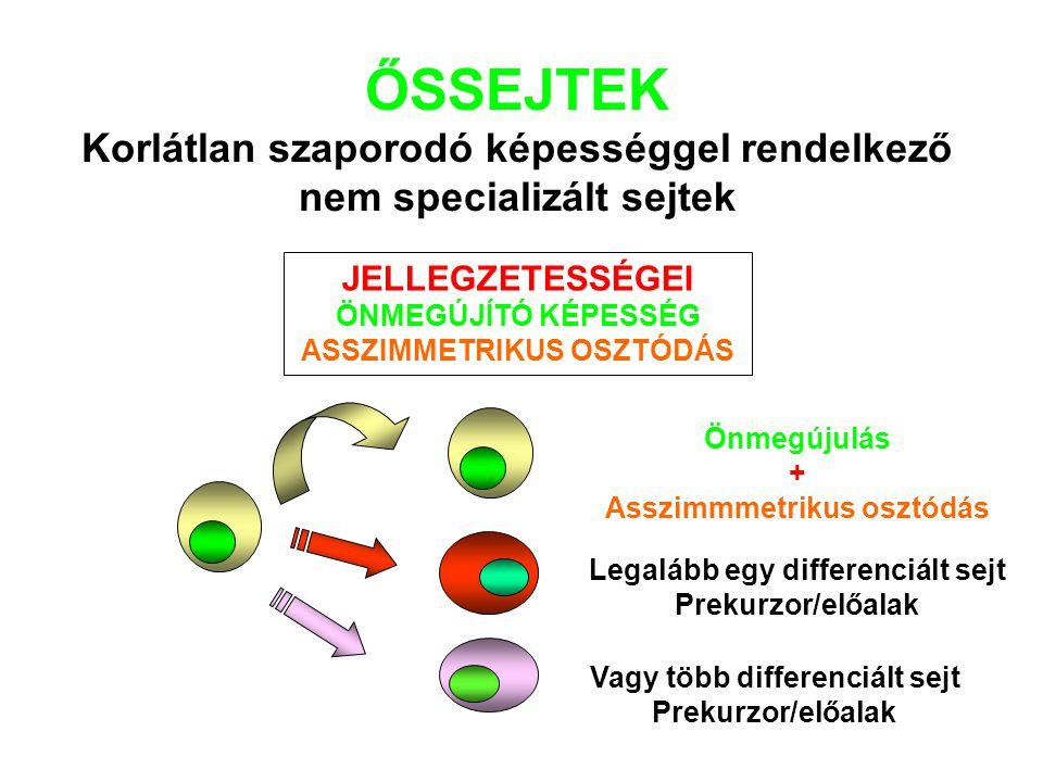 ŐSSEJTEK Korlátlan szaporodó képességgel rendelkező nem specializált sejtek Legalább egy differenciált sejt Prekurzor/előalak Önmegújulás + Asszimmmetrikus osztódás Vagy több differenciált sejt Prekurzor/előalak JELLEGZETESSÉGEI ÖNMEGÚJÍTÓ KÉPESSÉG ASSZIMMETRIKUS OSZTÓDÁS