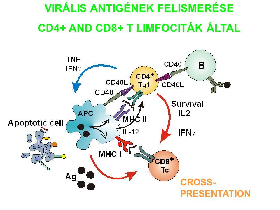VIRÁLIS ANTIGÉNEK FELISMERÉSE CD4+ AND CD8+ T LIMFOCITÁK ÁLTAL CROSS- PRESENTATION