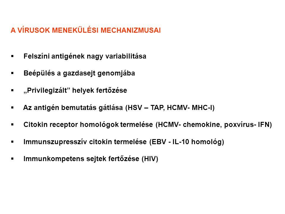"""A VÍRUSOK MENEKÜLÉSI MECHANIZMUSAI  Felszíni antigének nagy variabilitása  Beépülés a gazdasejt genomjába  """"Privilegizált helyek fertőzése  Az antigén bemutatás gátlása (HSV – TAP, HCMV- MHC-I)  Citokin receptor homológok termelése (HCMV- chemokine, poxvírus- IFN)  Immunszupresszív citokin termelése (EBV - IL-10 homológ)  Immunkompetens sejtek fertőzése (HIV)"""