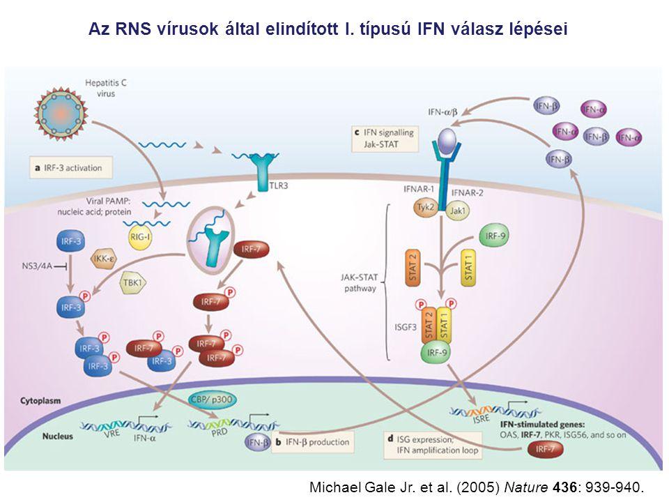Az RNS vírusok által elindított I.típusú IFN válasz lépései Michael Gale Jr.