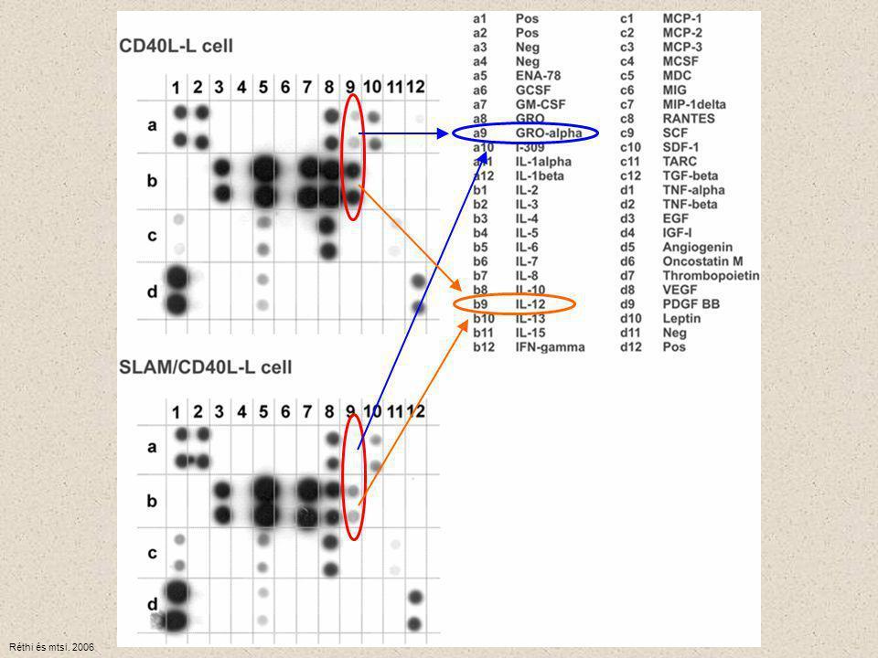 IMMUNHISZTOKÉMIA Jelzéssel ellátott, antigén-specifikus ellenanyag mutatja meg az antigént a szövettani metszetben, vagy a sejtszuszpenzióban Immunfluoreszcencia fluoreszcensen jelzett ellenanyag FITC – fluoreszcein izotiocianát (zöldessárga) PE – fikoeritrin (narancssárga) Immunoenzim módszer enzimmel konjugált ellenanyag P – peroxidáz AP – alkalikus foszfatáz ( a szubsztrátból oldhatatlan, színes csapadékot képeznek)