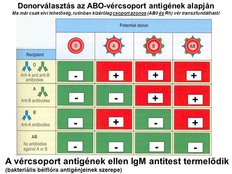 Donorválasztás az ABO-vércsoport antigének alapján Ma már csak elvi lehetőség, rutinban kizárólag csoport azonos (AB0 és Rh) vér transzfundálható! - -