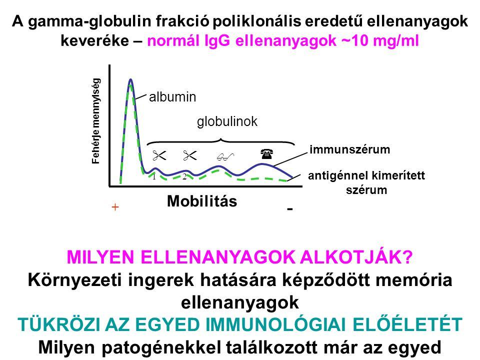 A gamma-globulin frakció poliklonális eredetű ellenanyagok keveréke – normál IgG ellenanyagok ~10 mg/ml immunszérum antigénnel kimerített szérum 11
