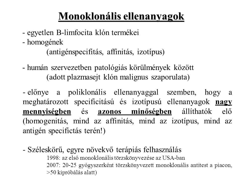 Monoklonális ellenanyagok - egyetlen B-limfocita klón termékei - homogének (antigénspecifitás, affinitás, izotípus) - humán szervezetben patológiás kö