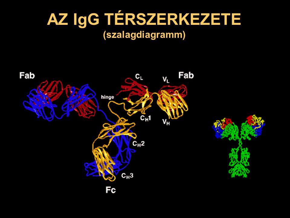 szekunder válasz az A antigénnel szemben primer válasz az A antigénnel szemben ellenanyagszint napok primer válasz a B antigénnel szemben