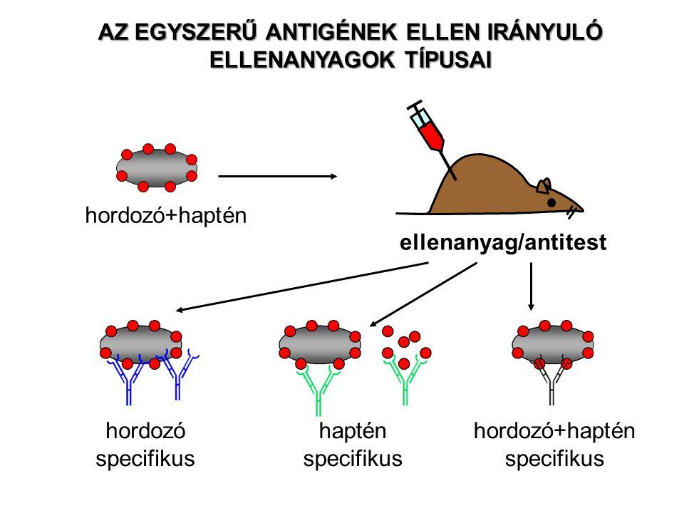 hordozó specifikus haptén specifikus hordozó+haptén specifikus hordozó+haptén ellenanyag/antitest AZ EGYSZERŰ ANTIGÉNEK ELLEN IRÁNYULÓ ELLENANYAGOK TÍ