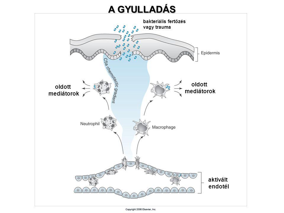 A GYULLADÁS oldott mediátorok oldott mediátorok aktivált endotél bakteriális fertőzés vagy trauma