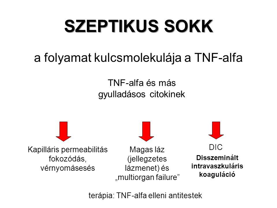 """SZEPTIKUS SOKK a folyamat kulcsmolekulája a TNF-alfa TNF-alfa és más gyulladásos citokinek Kapilláris permeabilitás fokozódás, vérnyomásesés DIC Magas láz (jellegzetes lázmenet) és """"multiorgan failure terápia: TNF-alfa elleni antitestek Disszeminált intravaszkuláris koaguláció"""
