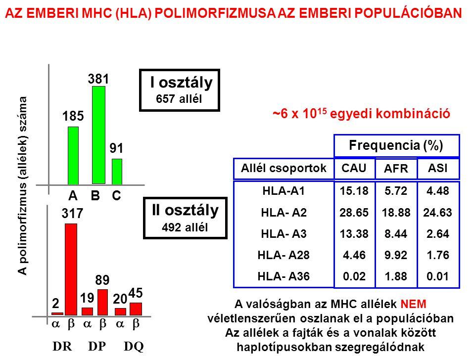 A valóságban az MHC allélek NEM véletlenszerűen oszlanak el a populációban Az allélek a fajták és a vonalak között haplotípusokban szegregálódnak 15.18 28.65 13.38 4.46 0.02 5.72 18.88 8.44 9.92 1.88 4.48 24.63 2.64 1.76 0.01 CAU AFR ASI Frequencia (%) HLA-A1 HLA- A2 HLA- A3 HLA- A28 HLA- A36 Allél csoportok 185 91 ABC A polimorfizmus (allélek) száma 381 I osztály 657 allél   2 317 19 89 20 45 II osztály 492 allél DRDPDQ ~6 x 10 15 egyedi kombináció AZ EMBERI MHC (HLA) POLIMORFIZMUSA AZ EMBERI POPULÁCIÓBAN