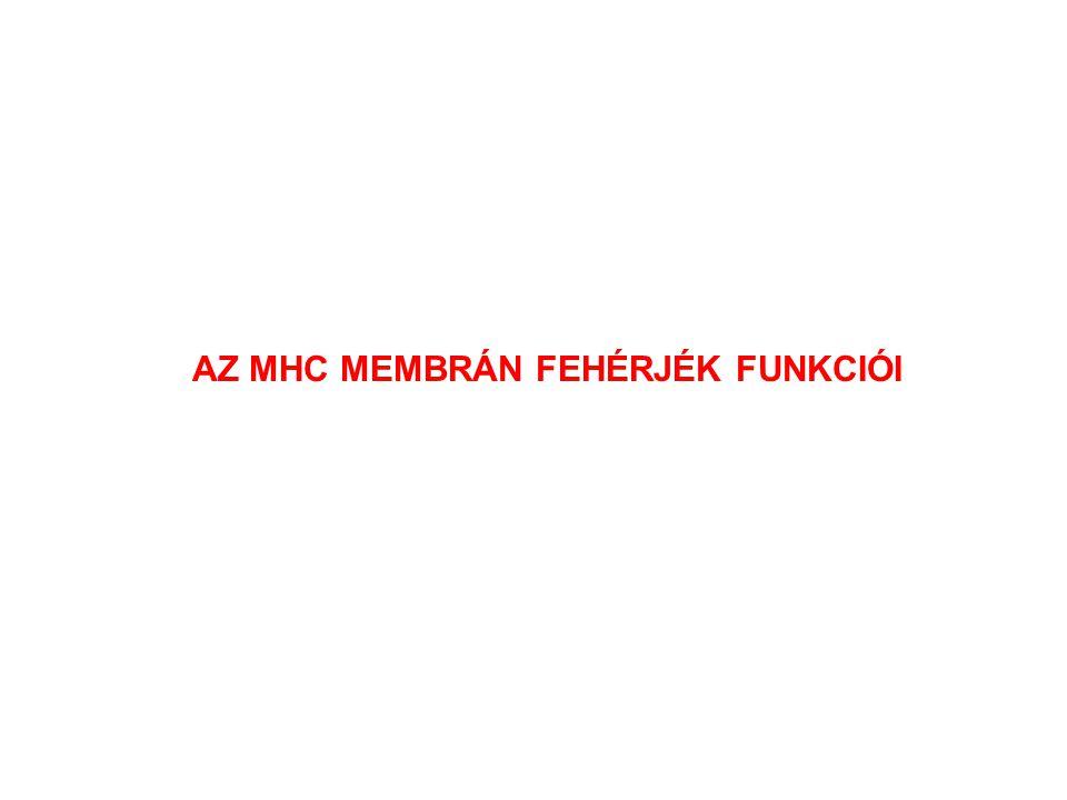 AZ MHC MEMBRÁN FEHÉRJÉK FUNKCIÓI