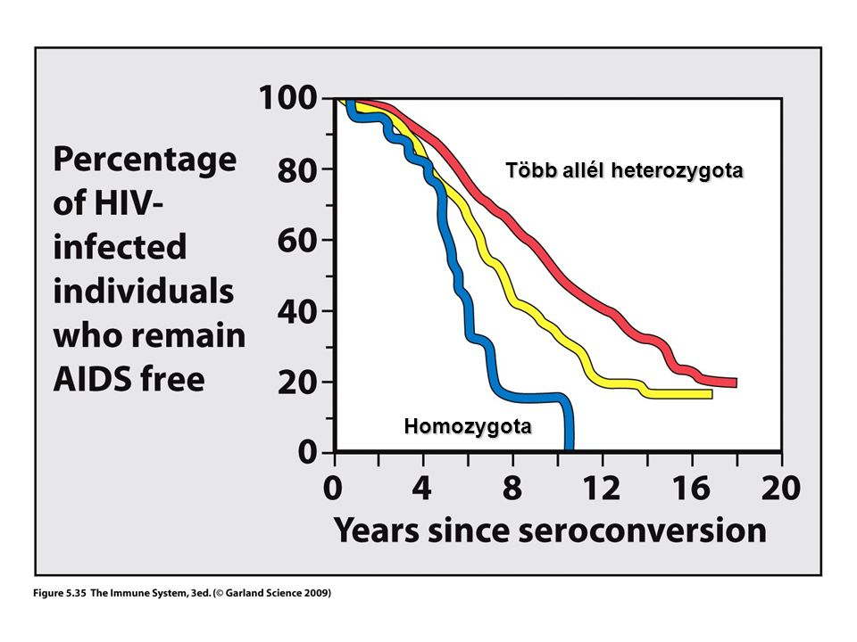 Több allél heterozygota Homozygota