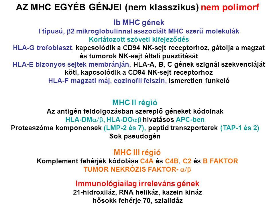 AZ MHC EGYÉB GÉNJEI (nem klasszikus) nem polimorf Ib MHC gének I típusú,  2 mikroglobulinnal asszociált MHC szerű molekulák Korlátozott szöveti kifejeződés HLA-G trofoblaszt, kapcsolódik a CD94 NK-sejt receptorhoz, gátolja a magzat és tumorok NK-sejt általi pusztítását HLA-E bizonyos sejtek membránján, HLA-A, B, C gének szignál szekvenciáját köti, kapcsolódik a CD94 NK-sejt receptorhoz HLA-F magzati máj, eozinofil felszín, ismeretlen funkció MHC II régió Az antigén feldolgozásban szereplő géneket kódolnak HLA-DM  HLA-DO  hivatásos APC-ben Proteaszóma komponensek (LMP-2 és 7), peptid transzporterek (TAP-1 és 2) Sok pseudogén MHC III régió Komplement fehérjék kódolása C4A és C4B, C2 és B FAKTOR TUMOR NEKRÓZIS FAKTOR-  Immunológiailag irreleváns gének 21-hidroxiláz, RNA helikáz, kazein kináz hősokk fehérje 70, szialidáz