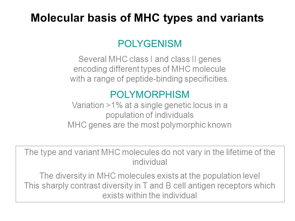 Molecular basis of MHC types and variants POLYMORPHISM Variation >1% at a single genetic locus in a population of individuals MHC genes are the most polymorphic known The type and variant MHC molecules do not vary in the lifetime of the individual The diversity in MHC molecules exists at the population level This sharply contrast diversity in T and B cell antigen receptors which exists within the individual POLYGENISM Several MHC class I and class II genes encoding different types of MHC molecule with a range of peptide-binding specificities.