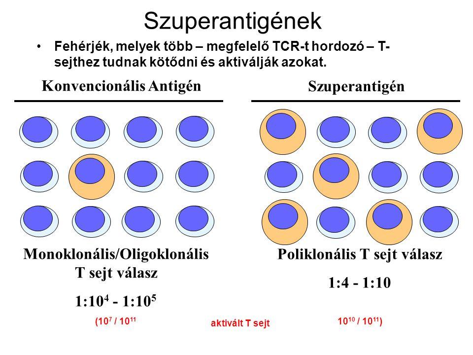 Szuperantigének Konvencionális Antigén Monoklonális/Oligoklonális T sejt válasz 1:10 4 - 1:10 5 (10 7 / 10 11 Szuperantigén Poliklonális T sejt válasz