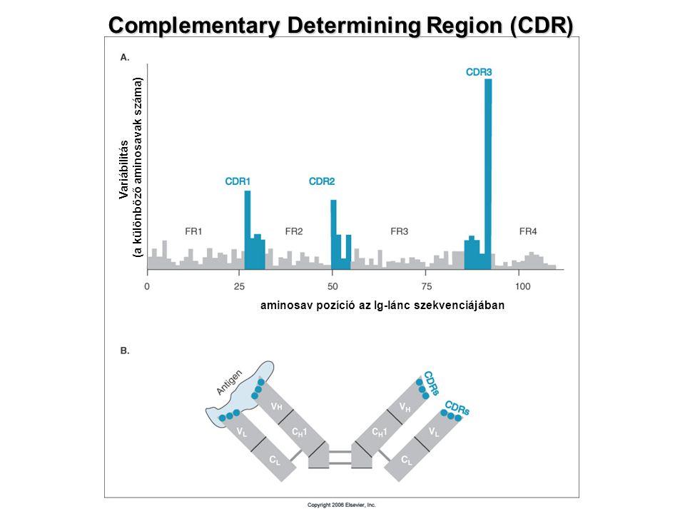 Complementary Determining Region (CDR) aminosav pozíció az Ig-lánc szekvenciájában Variábilitás (a különböző aminosavak száma)