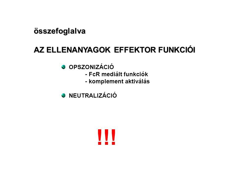 összefoglalva AZ ELLENANYAGOK EFFEKTOR FUNKCIÓI OPSZONIZÁCIÓ - FcR mediált funkciók - komplement aktiválás NEUTRALIZÁCIÓ !!!